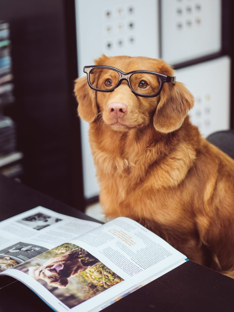 brown dog with glasses separating inventory cycle count by categories